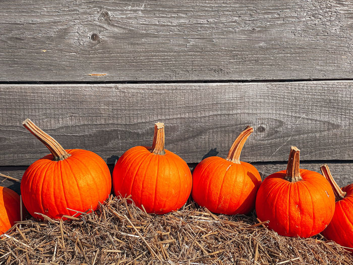 View of pumpkins against wall