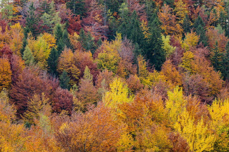 Colors Autumn Autumn Collection Autumn Colors Autumn Leaves Colors Colors Of Autumn Colors Of Nature Landscape Landscape_Collection Landscape_photography Landscapes Mountain Nauture No People Scenics Tranquility Tree Trees Treescape Treescollection