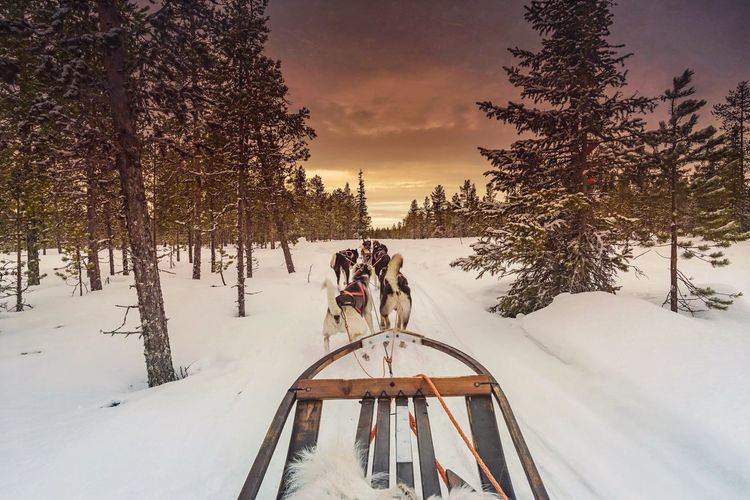 Dogs Pulling Sled On Snow Covered Field Against Cloudy Sky During Sunset