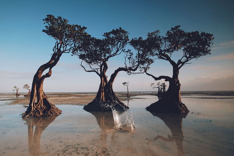 Water Tree Sea