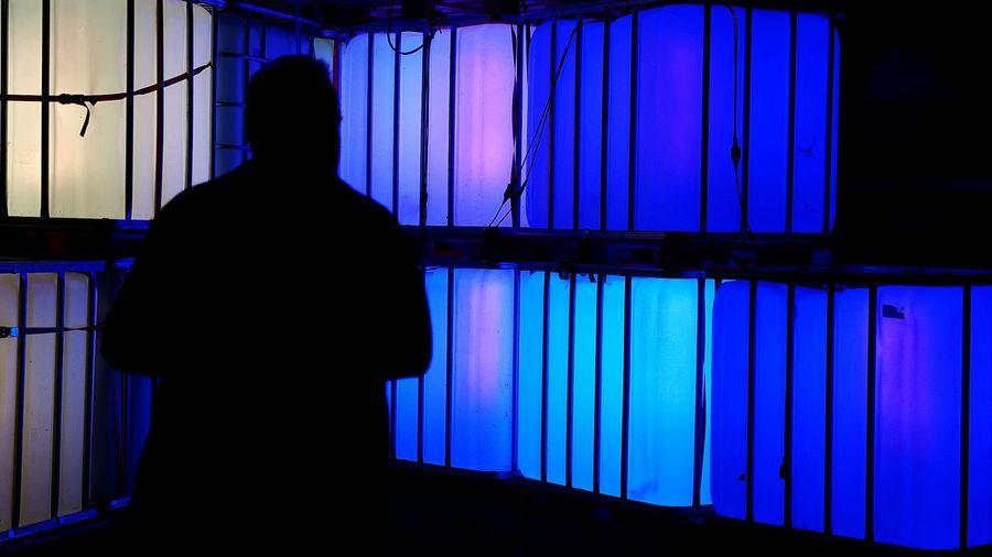 Solitude Night Person Dark Full Length Illuminated Silhouette CutOut Portrait Closeup Portrait Of A Man  Light Cube Outdoors Standing Curtain Geometric Shapes Blue Outline Unrecognizable Person Rectangle NightSnaps Jardin Du Plaisir Part Of Zürifäscht 2016 Impressions |2|