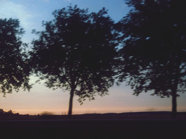 Sunset France Ontheroad Tree