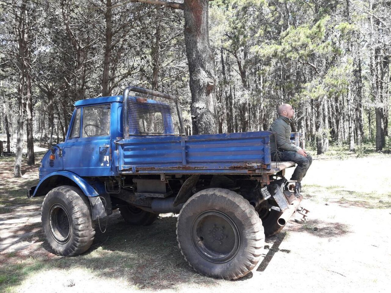 tree, transportation, day, land vehicle, outdoors, no people