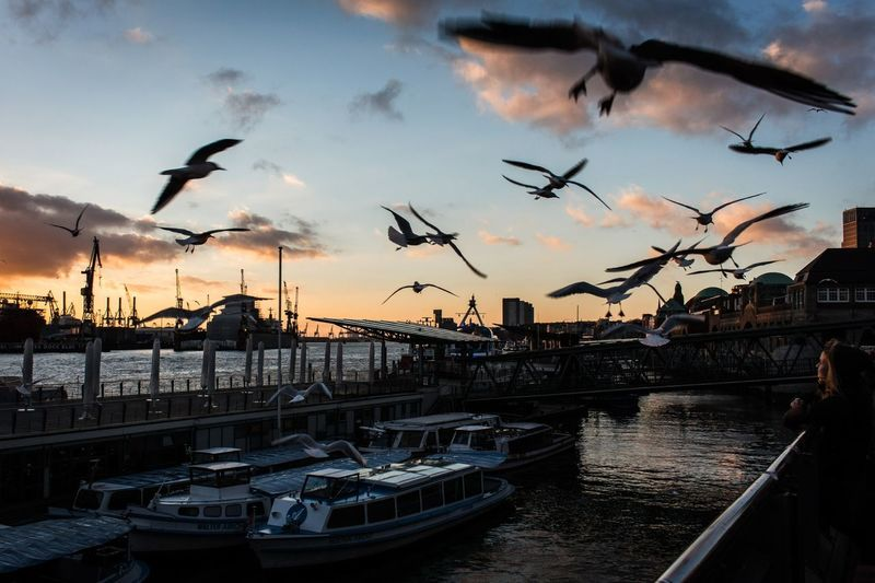 Seagulls Flying At Harbor Against Sky During Sunset