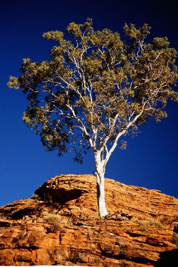 Australia Australia Blue Sky Eucalyptus Tree Northern Territory Outback Rock Formation Rusty Rock White Tree