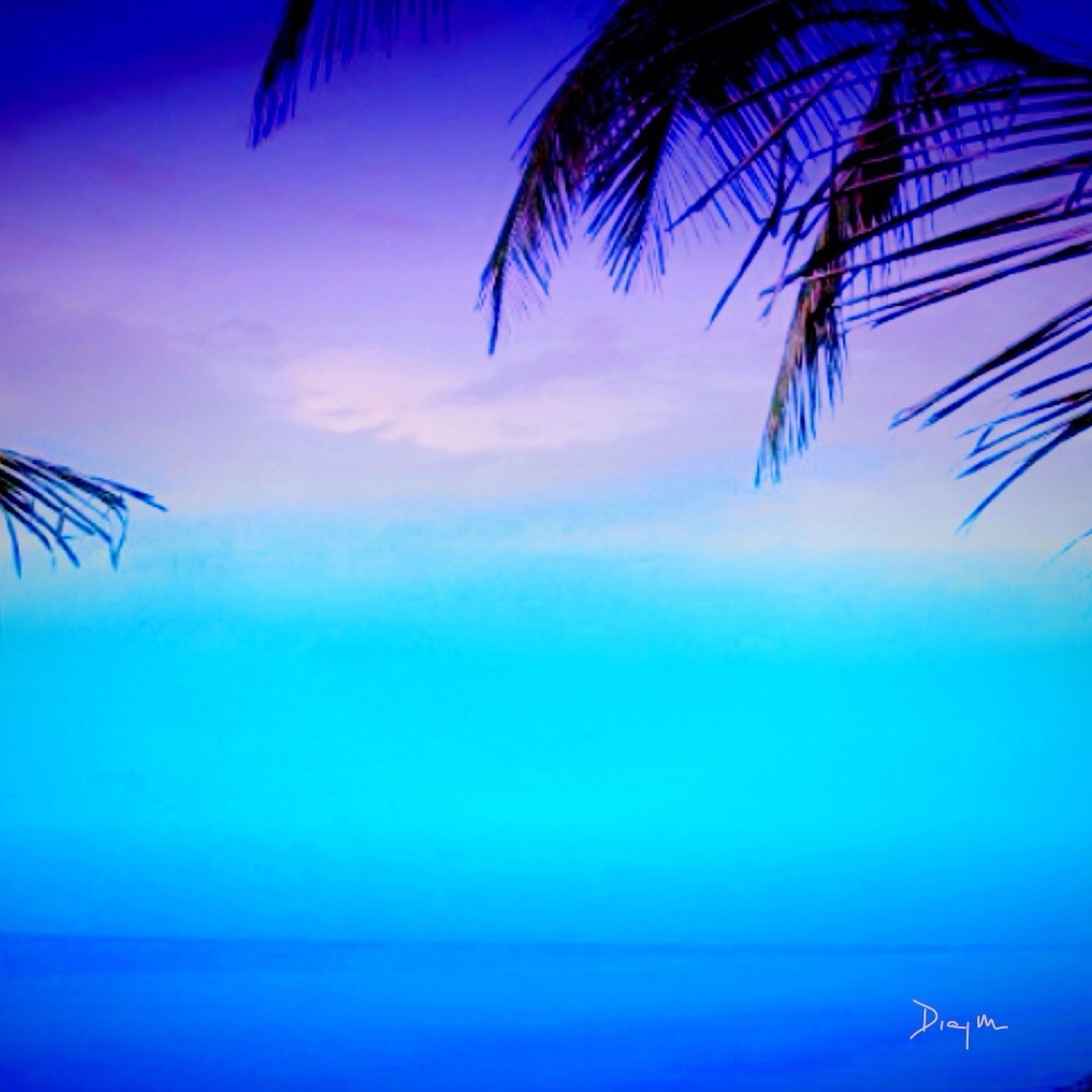 blue, low angle view, nature, sky, palm tree, beauty in nature, tranquility, scenics, tranquil scene, sea, no people, outdoors, growth, flying, day, idyllic, cloud, clear sky, cloud - sky, silhouette