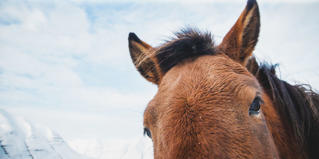 Close-up of a horse against sky