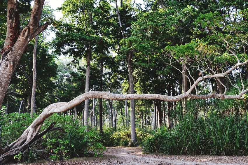 Andaman island with a wonderful forest