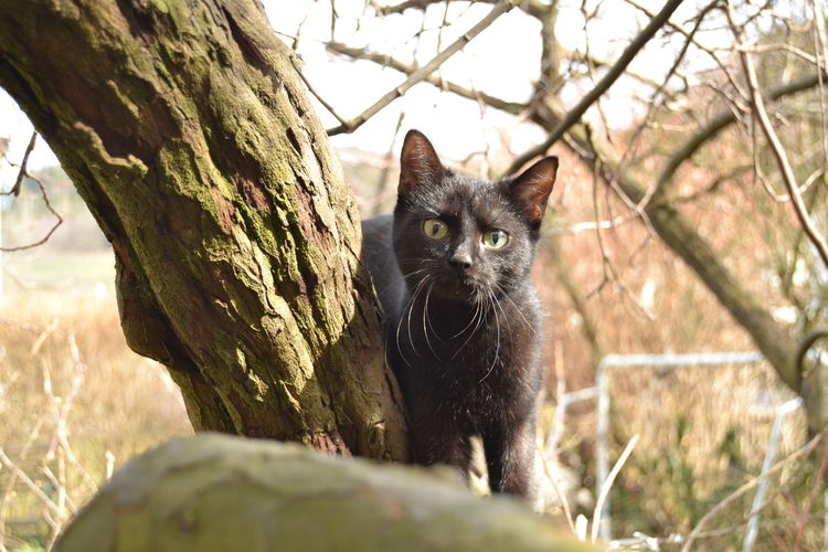 Animal Themes Black Cat Black Cat Is Just So Beautiful. Black Cat Photography Close-up Day Domestic Animals Domestic Cat Feline Green Eyes I See You Leopard Mammal Nature No People One Animal Outdoors Pets Portrait Tree Young Cat
