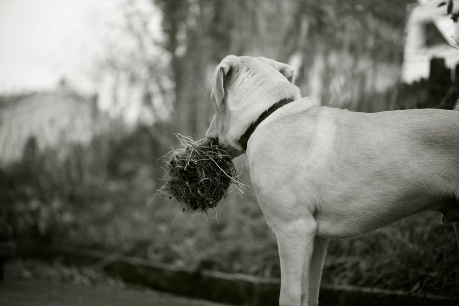 the thief Talking Pictures Working Animal Animal Themes Black And White Blackandwhite Canine Dog Getting Inspired Monochrome My Dog Noiretblanc Portrait Inner Power The Creative - 2018 EyeEm Awards