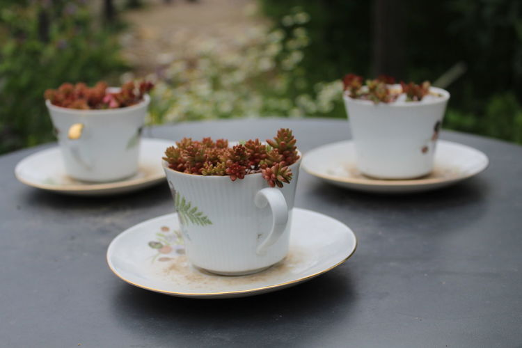 Plant Part Tea TeaCup Close-up Coffee Coffee - Drink Coffee Cup Crockery Cup Day Drink Focus On Foreground Food And Drink Freshness Mug No People Plant In Pot Plate Refreshment Saucer Still Life Table Tea Time Temptation
