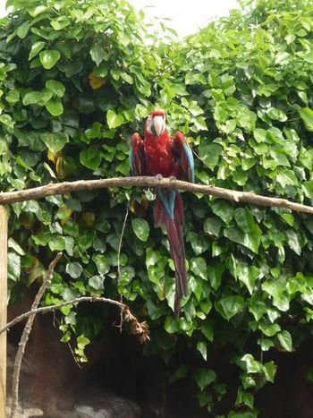 Birds Colchester Zoo Colour Colourful Enjoying Life Parrot Parrot Love Zoo Beak Redandblue Bird Bird Photography