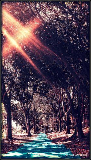 Caminho de Luz Tree Tranquility Photography Foto Fotografia Arvore Photo Fotoart Raio De Luz