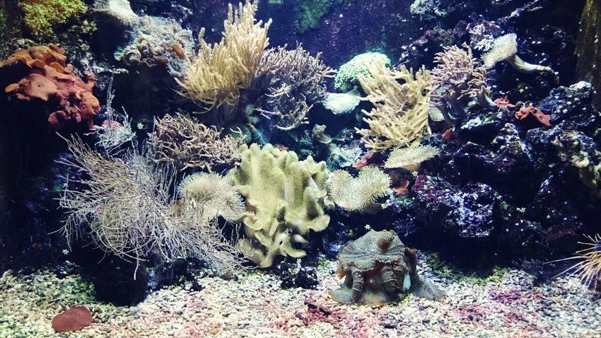 Photography People Photographer Nature Unterwasserwelt Wasserwelt Beautiful ♡ Folowme Riff