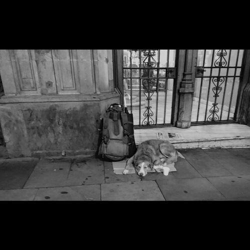 Day Blancoynegro Negro Streetsofcatalunya Barcelona, Spain Catalunya EyeEm Best Shots - Black + White Somosfelices Blanco Y Negro Blackandwhitephotography Biking Around Eye4black&white  Fortheloveofblackandwhite Blackandwhite Photography Black And White Photography Sad