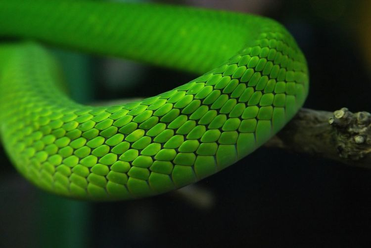 Close-Up Of Green Snake On Tree