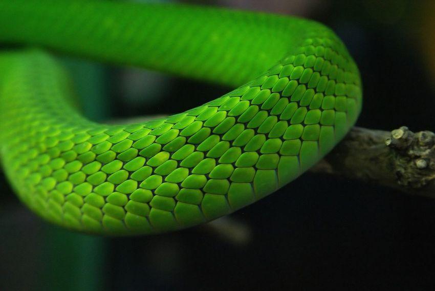 Eye4photography  EyeEm Best Shots EyeEm Gallery EyeEm Nature Lover EyeEmBestPics Reptilien Schlange  Skin Snake