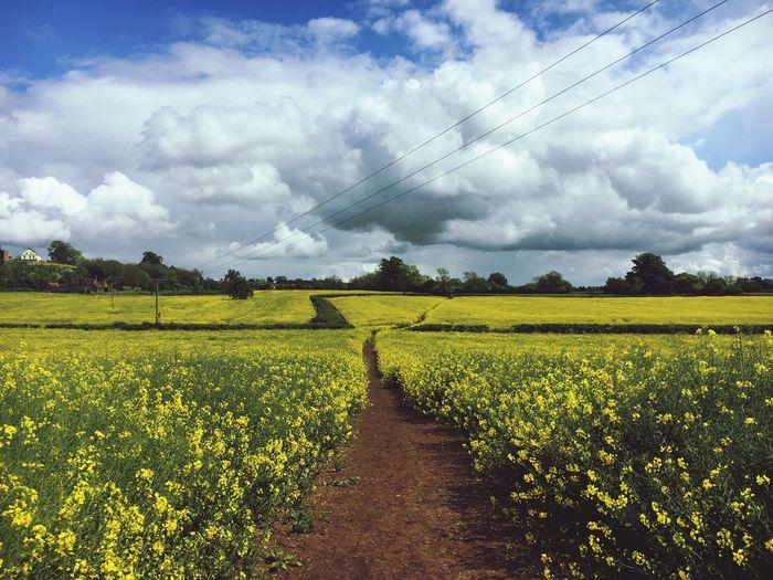 Dogwalking Dogwalk Britishcountryside Dogandaniphone