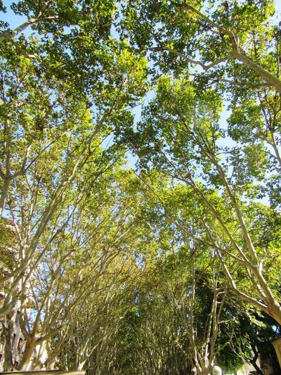 Tree Growth Nature Day Green Color Outdoors No People Beauty In Nature SPAIN Leaves🌿 Lastsummerdays