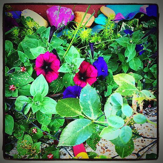 Kas© Garden Messedupjournal Flowers Scotland 💕 Plant Green Pretty