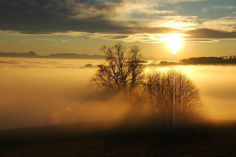Foggs Sunset Foggy Day Foggy Landscape Fog Sunset Sky Beauty In Nature Tranquility Scenics - Nature Tranquil Scene Cloud - Sky Idyllic Tree Nature Sunlight