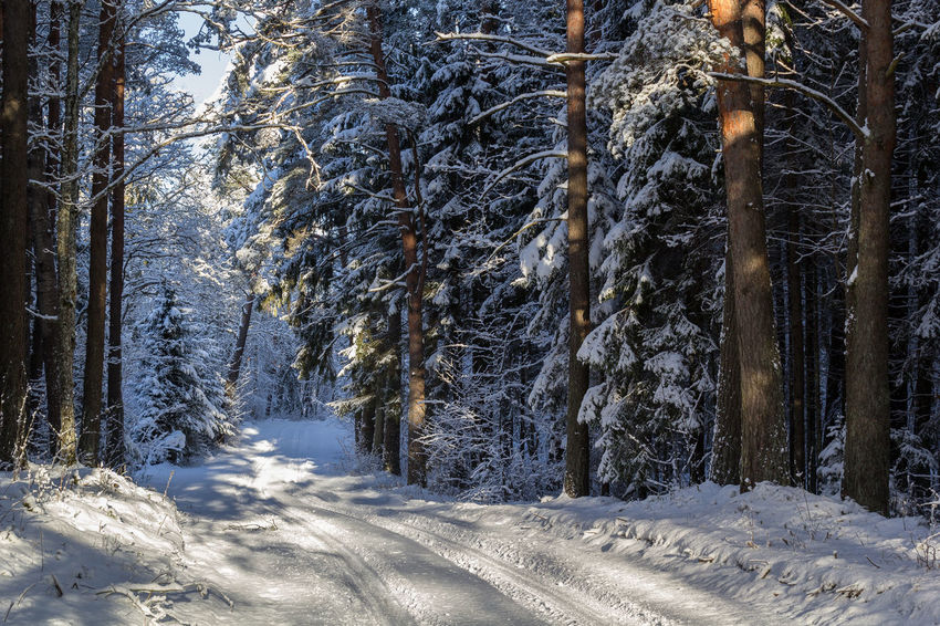 Beauty In Nature Blue Sky Branch Cold Cold Days Cold Temperature Day Europa Forest Landscape Latvia Nature No People Outdoors Scenics Snow Sunny Day Tranquil Scene Tranquility Tree Tree Trunk Tukums Weather Winter Winter Wood