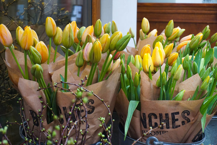 tulips for sale Tulip Tulips Spring Springtime Spring Flowers Flower Flower Head Price Tag Bouquet Close-up Plant Green Color For Sale Flower Market Stall Market Stall Market Display Flower Shop Bunch Street Market Various Retail Display Shop