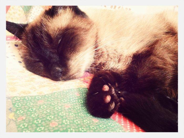 Relaxing Sleppy Cutekitty Mycat