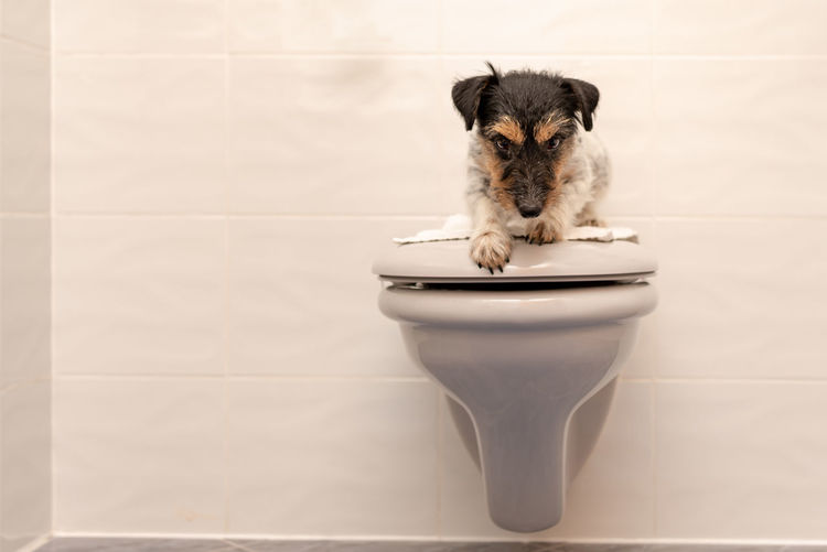 Portrait of dog sitting on toilet seat against wall