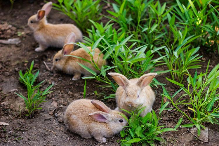 Rabbits on field