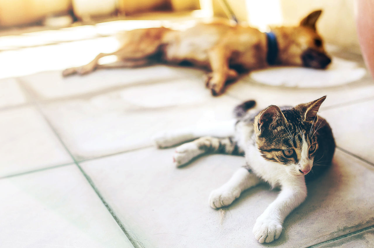 Close-up of cat with dog sleeping in background