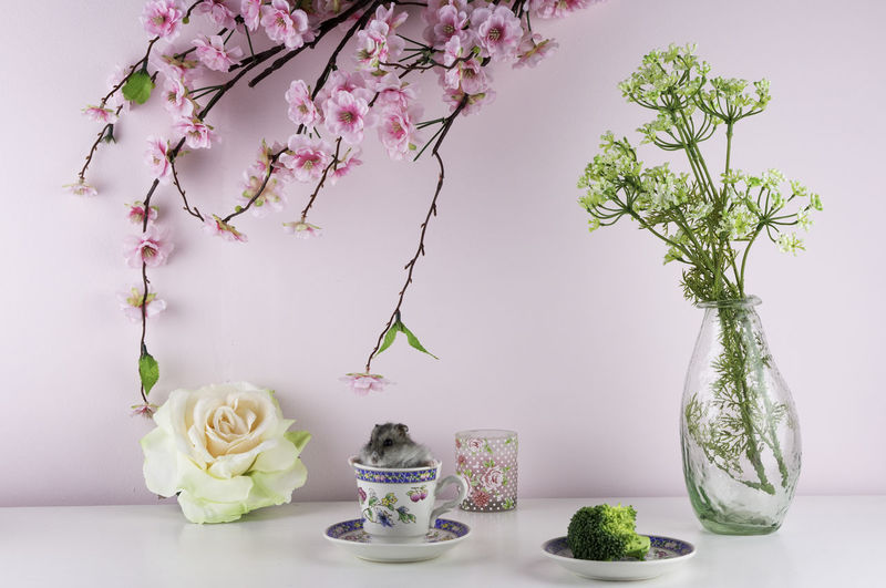Animal Animal Themes Branch Broccoli Cup Cute Cute Pets Day Flower Hamster Indoors  Nature No People Pets Plant Rodent Rose🌹 Still Life Table Tea - Hot Drink Tea Time Vase