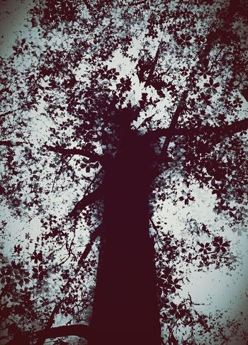 TreePorn Tree_collection  Creepy Spooky Atmosphere Creepypasta Scary Places Foresthills Check This Out