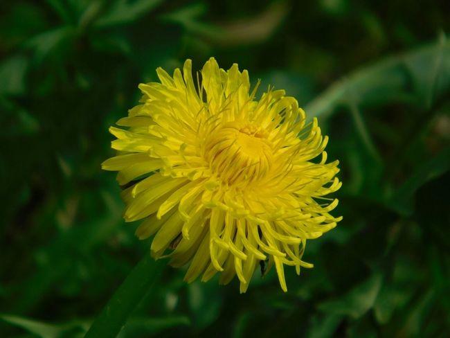 Spring Flowers Nature_collection Blume🌸 Nature Orginal Natural