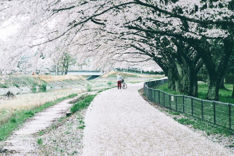 Japan Travel Sakura The Street Photographer - 2015 EyeEm Awards Holiday POV Capture The Moment