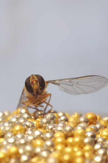 Close-up of insect on table against white background