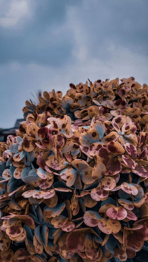 Close-up of dried leaves on plant against sky