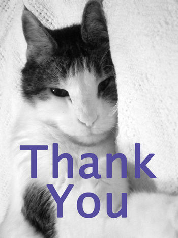 Thank you from Daisy Greeting Card  Thank You Card Cat Cute Pet Black&white