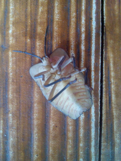 แมลงนอนหงาย Plastic Environment - LIMEX IMAGINE แมลง Insect Insects  Insect Photography Insects Collection Insect Paparazzi Insect Photo Insect_perfection Insects Of Eyeem Insect Photo UnderSea Sea Life Seafood Close-up Butterfly - Insect