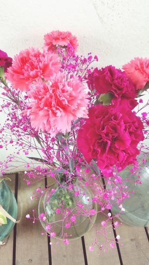 Pretty Pink Spring Flowers EyeEm Best Shots - Flowers