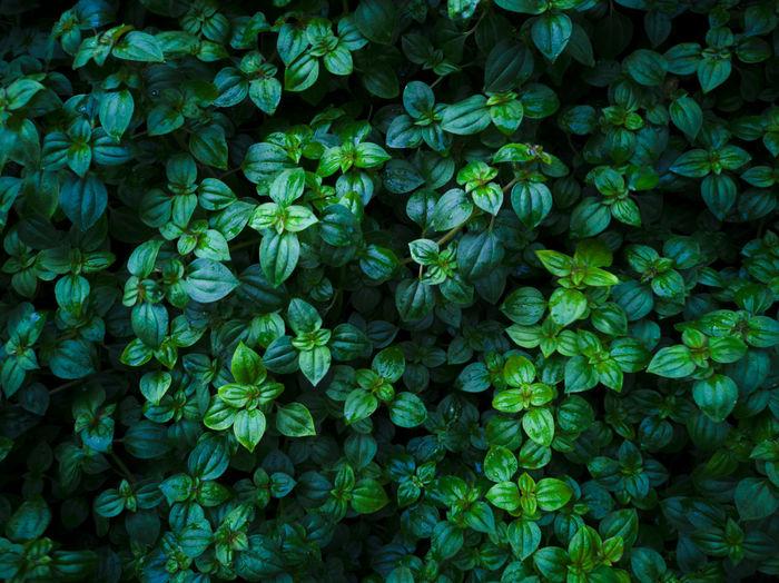 Green leaf for