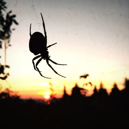 Learn & Shoot: Layering Spider Hotzenwald Spider Capture The Moment Turn Your Lights Down Low Sunset 43 Golden Moments Sommergefühle