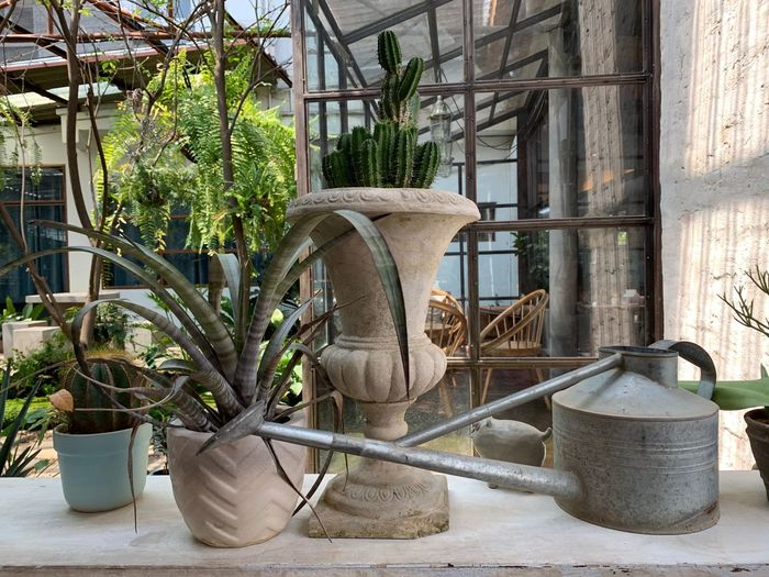 Plant Architecture Built Structure Building Exterior Growth Nature Day No People Potted Plant Metal Tree Building Window Outdoors Old Art And Craft Gardening Seat Abandoned Flower Pot