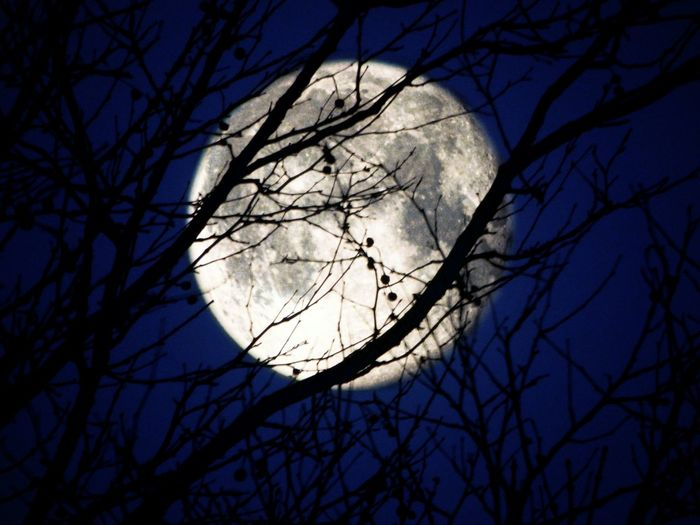 Moon Silhouette Night Editing Fun Bare Tree Branch Tree Low Angle View Circle Sky No People Outdoors Nature Beauty In Nature Astronomy
