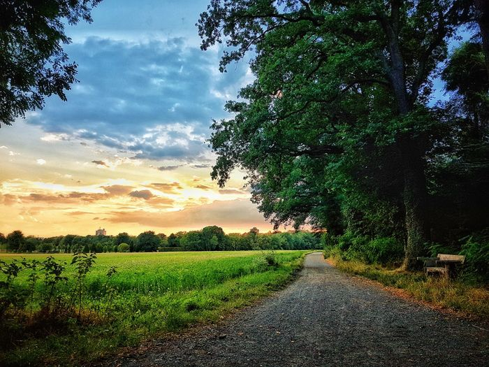 Road amidst trees on field against sky