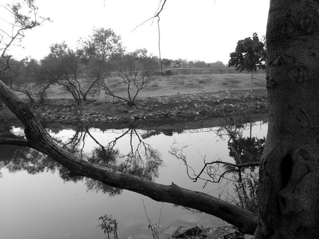 black$white Black & White Winter Reflection Tree Water Lake Nature Outdoors Plant No People Day Beauty In Nature Sky