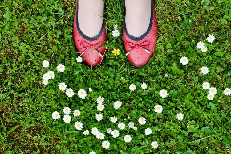 daisies everywhere... Beauty In Nature Daisy Flower Flower Head Fragility Fresh On Eyeem  Freshness From Above  Grass Grassy Green Color Growth Human Foot Lifestyles Low Section Nature Outdoors Standing Summertime The Essence Of Summer The Great Outdoors - 2016 EyeEm Awards TheWeekOnEyeEM A Bird's Eye View Eyeemphoto Sommergefühle