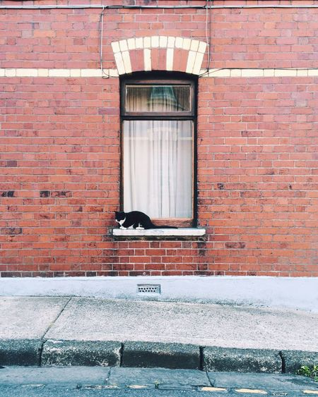 Side View Of A Cat On Window Sill