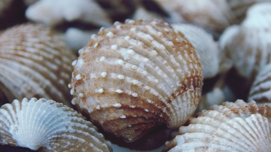 Close-up of seashell on sea