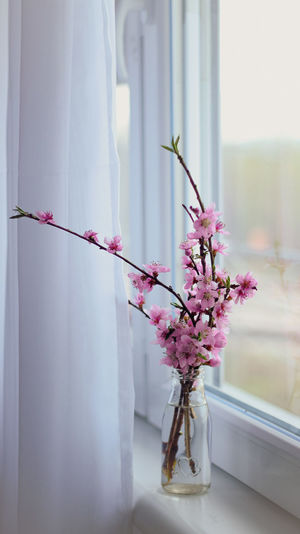 Close-up of pink flowering plant in vase
